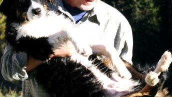 Hunde dürfen in der Badesaison in den Leutturm. Foto: #BadeseeMieming
